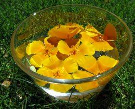 Bachblüten selbst gemacht