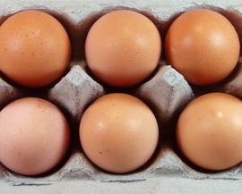 Bio-Eier sind nicht gleich Bio-Eier
