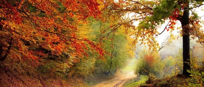 CO2 und Methangas lassen die Natur gedeihen